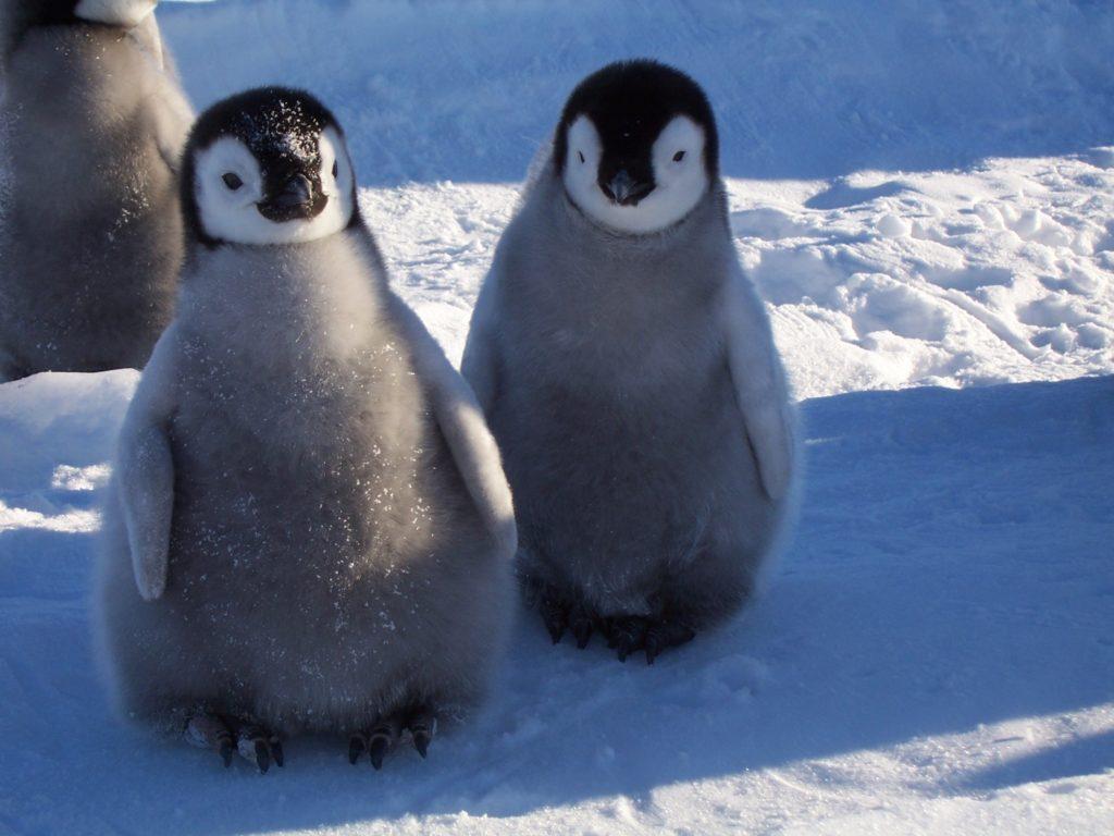 Кто живет в Антарктиде из животных-2