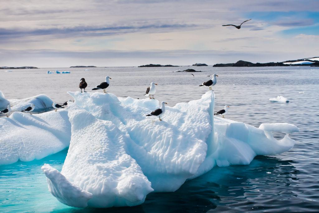 Кто живет в Антарктиде из животных-3
