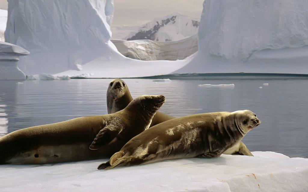 Кто живет в Антарктиде из животных-4