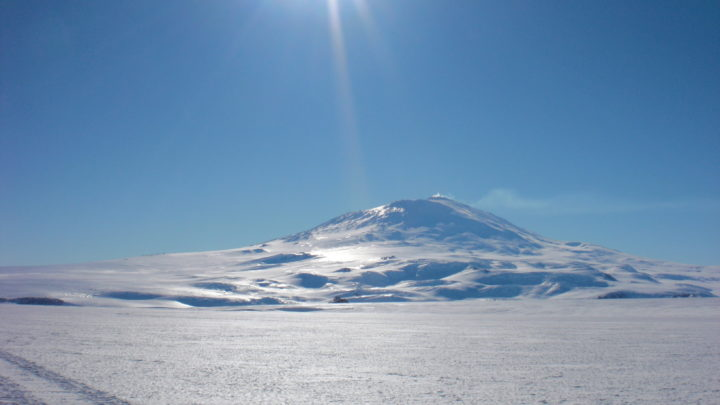 Кто живет в Антарктиде из животных