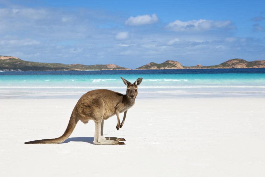 Кто живет в Австралии-2