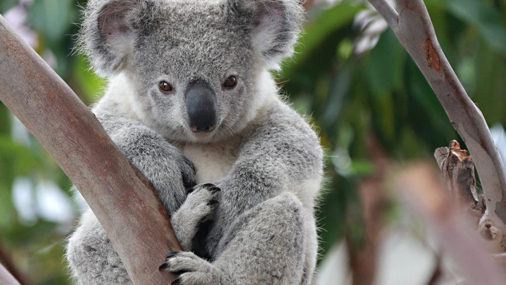 Кто живет в Австралии-3