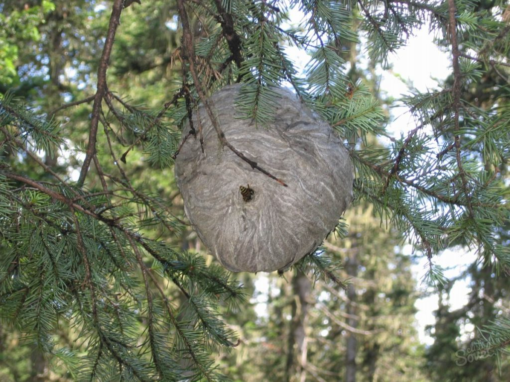 У кого гнездо из бумаги-9